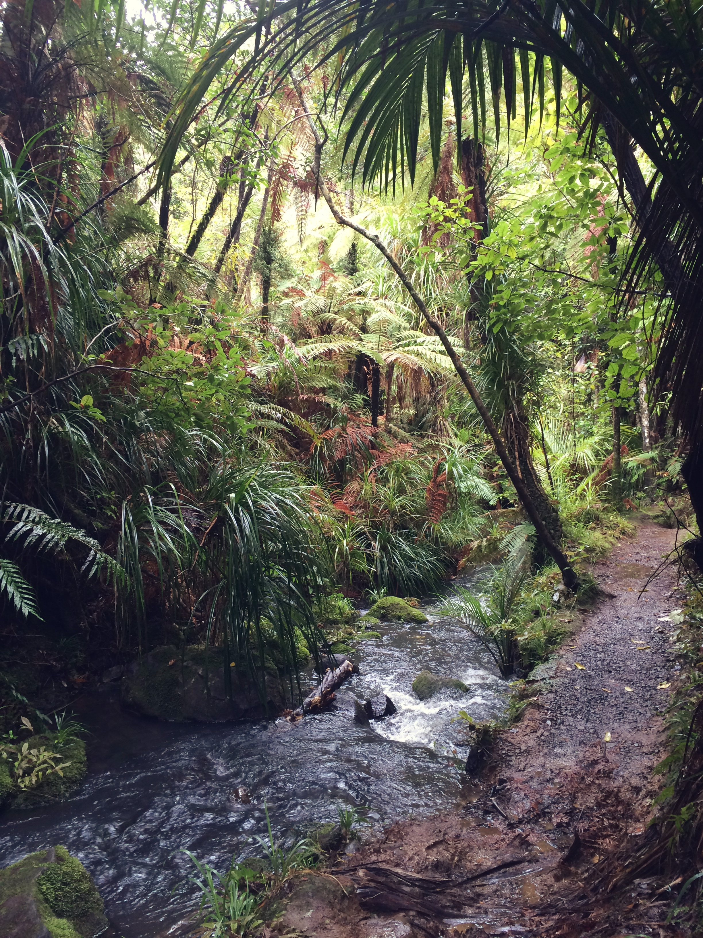The Fairy Falls Track, Waitakere Ranges, New Zealand