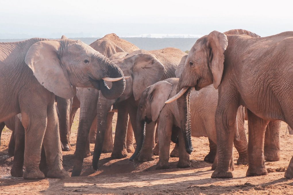 A group of elephants at the watering hole